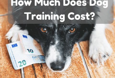 dog training cost