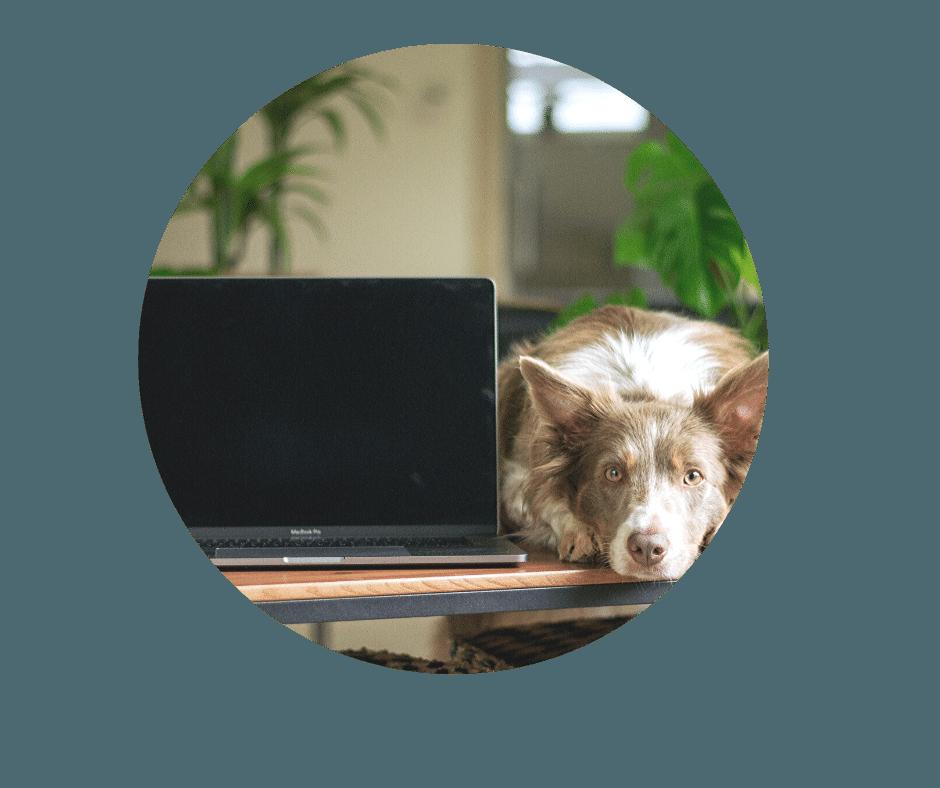 dog training media