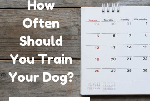 how often to train a dog