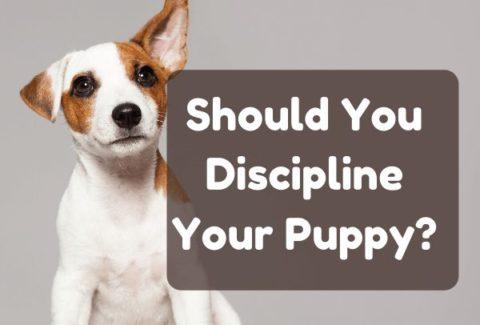 puppy discipline