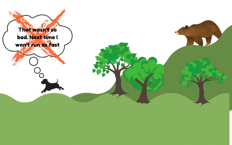 reactive dog running