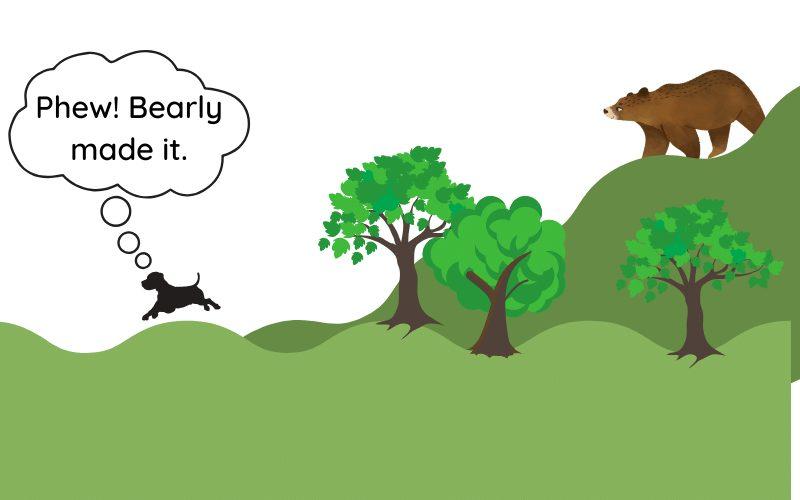 reactive dog runs