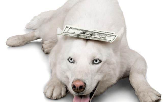 dog with money on head