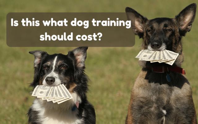 dog training cost