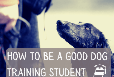 How to be a good dog training student