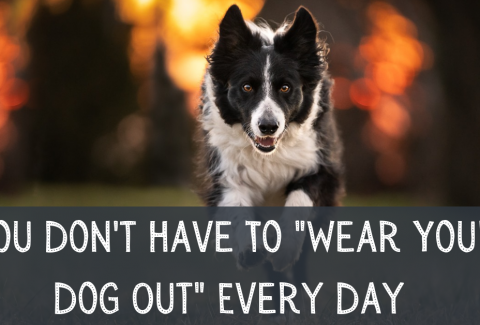 You Don't Have To Wear Your Dog Out Every Day-2
