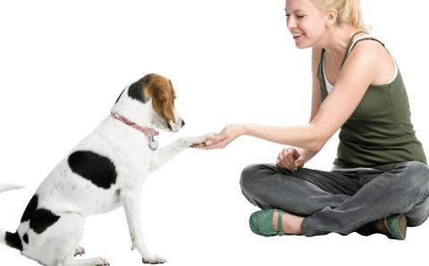 dog paw owner