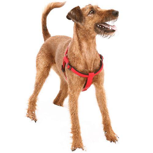 happy irish terrier training