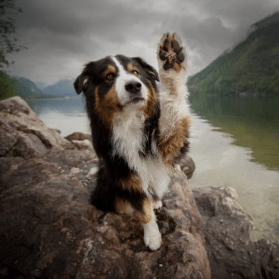 aussie waving