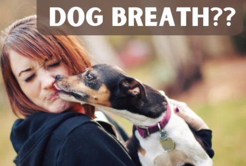 dog breath stinks