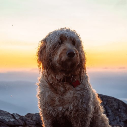 beautiful doodle in the sunset