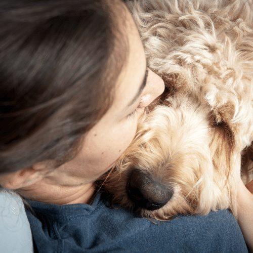 cuddling mini goldendoodle