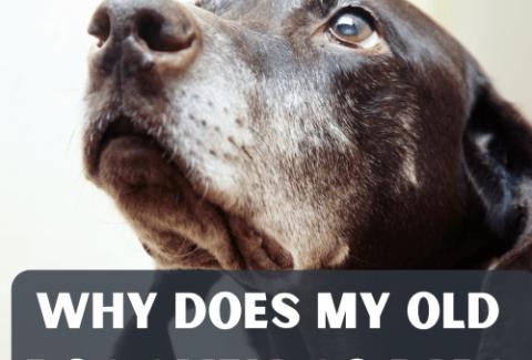 old dog smell so bad