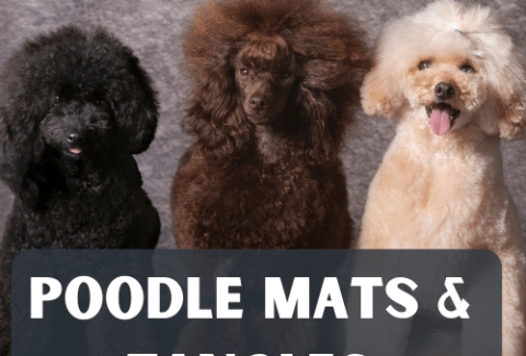 poodle mats and tangles