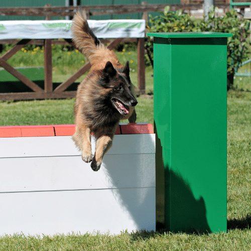 dog agility wall jump