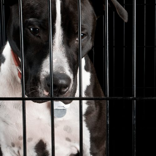 black and white dog in a crate