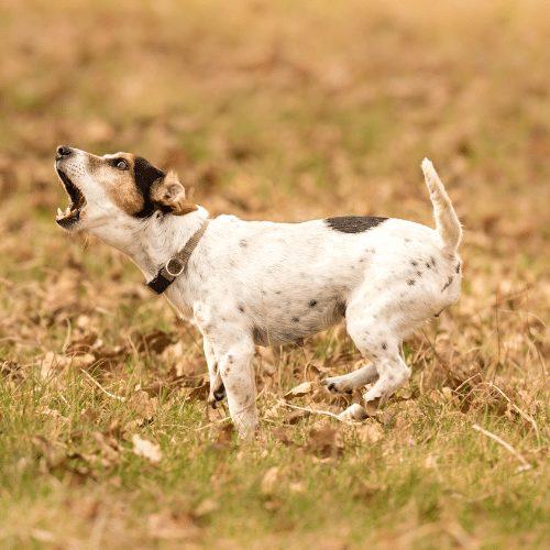 train dog to stop barking