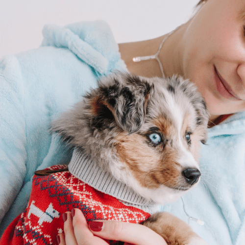 aussie with owner in a sweater