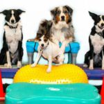 Canine Fitness Course