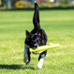 Learn To Fetch