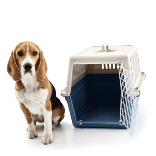 a dog with a crate on the white background