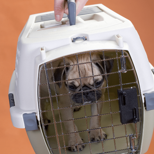 A dog in a crate on the orange background