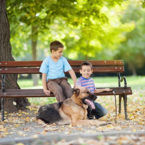 german shepherd and children on the bench