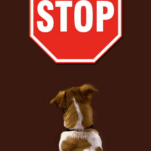 dog and a stop sign