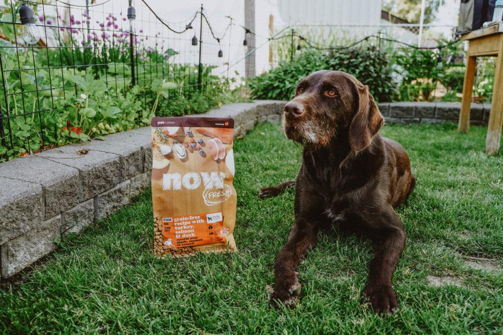 NF dog owner backyard