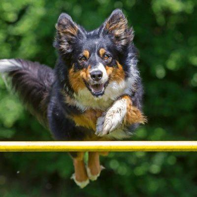 agility training cost-2