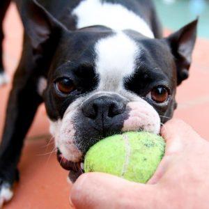 dog_fetch