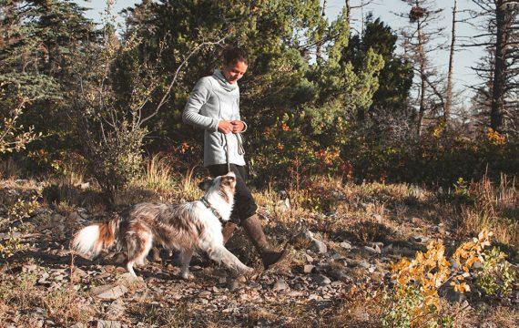 loose leash walking perfect obedience onlien class (1)